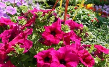 article homee 1272876897sajam cvijeca2 140508 | GRDELIN BUZET